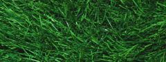 Gazon Fotbal 3